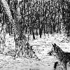 A Fox in the Forest: Pen illustration  Found under: Illustration (traditional)